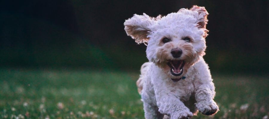 Tips to Help Your Pet Cope with This Pandemic in a Healthy Way